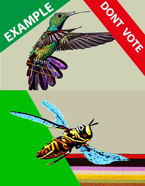example 3 the hummingbird and the bee